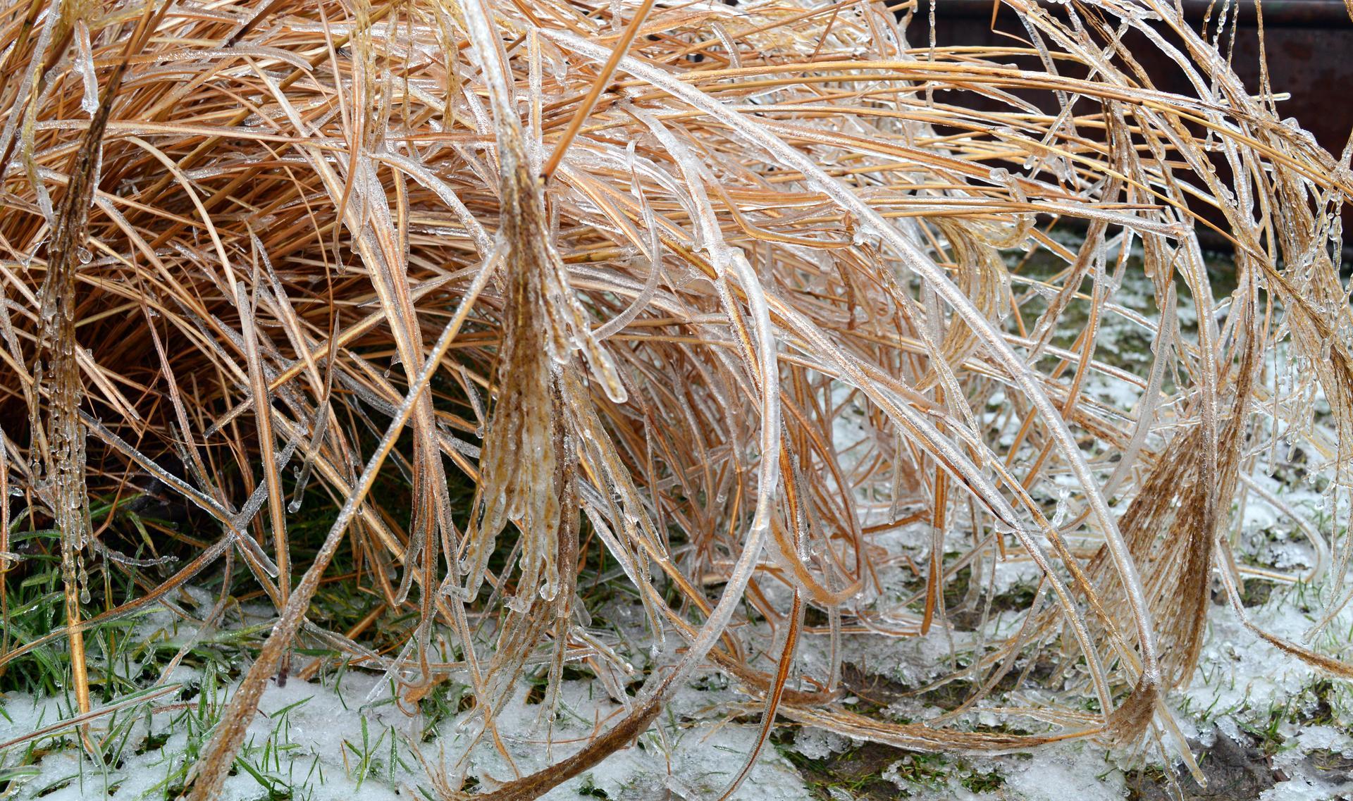 Naša prírodná perma záhradka v roku 2021 - 2/2021 - trávy neviažeme, vyzeralo to super