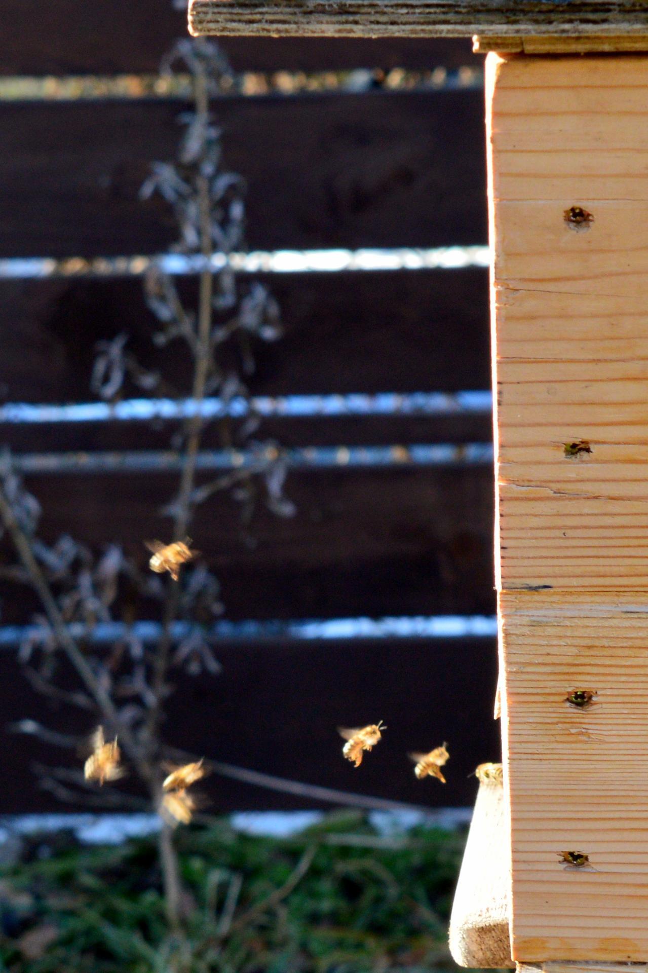Naša prírodná perma záhradka v roku 2021 - 2/2021 - koncom februára sa oteplilo natoľko, že včielky sa rozlietali von a my sme v krátkych rukávoch stolovali na terase