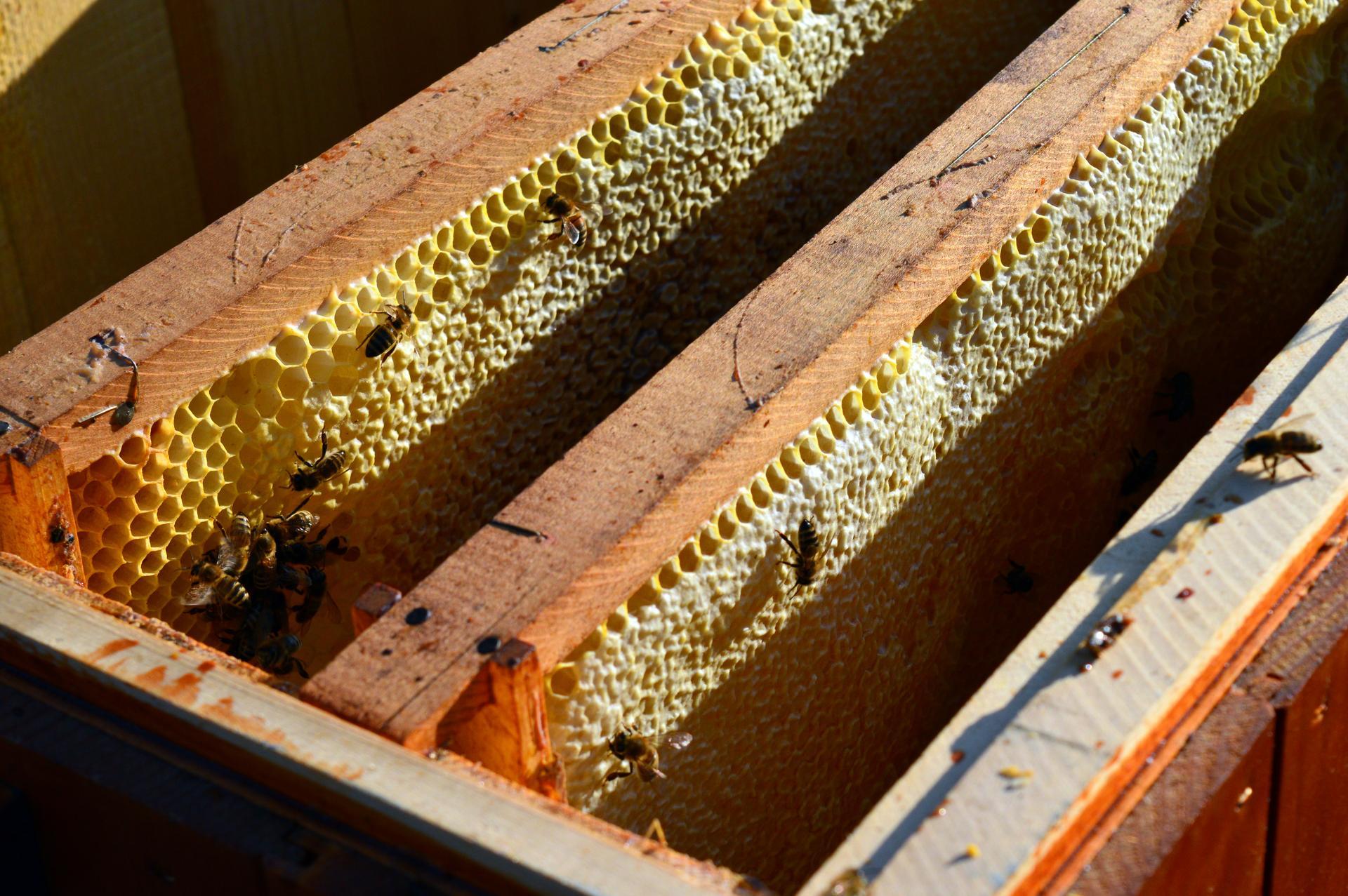 Naša prírodná perma záhradka v roku 2021 - 2/2021 - do prázdneho úľa chodili na lup včielky z celého okolia