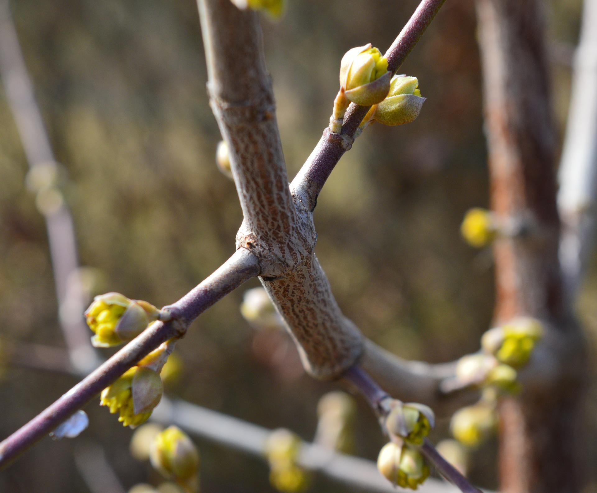 Naša prírodná perma záhradka v roku 2021 - 3/2021 - drieň veľmi opatrne