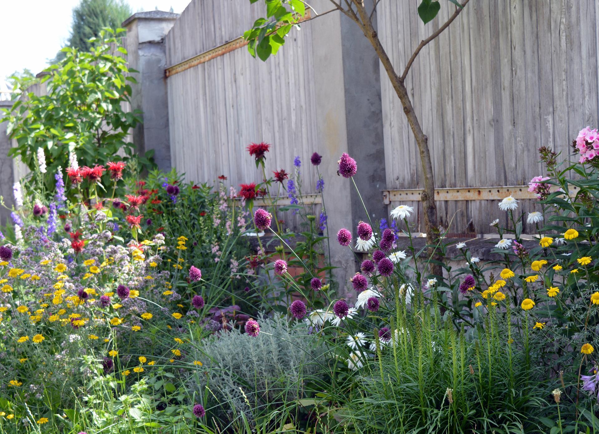 Naša prírodná perma záhradka v roku 2021 - 7/2021 - no a tu výbuch farieb, šialené, nikdy takto spolu nekvitli, skrátka tento rok bol čudný celkovo