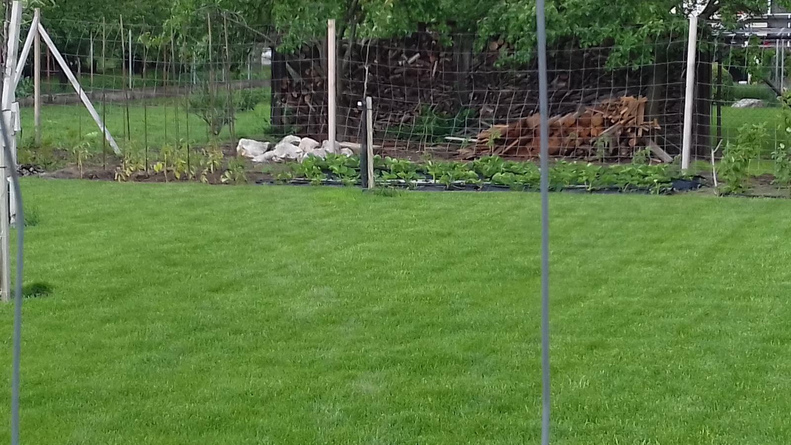 Zahrada 2018~2019 - Maj 2019_Trava a zahrada po upravach