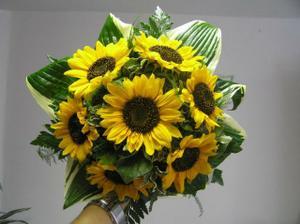 Slunečnice jsou krásné...