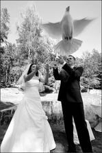 vypouštění svatebních holoubků