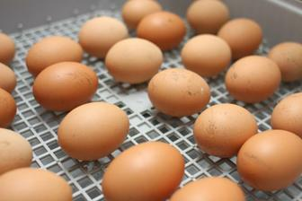 To je bio vajce a teoreticky bude to bio kura :-D