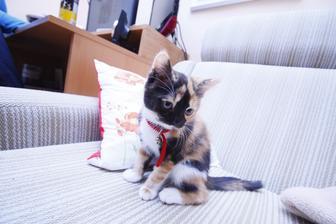 Moja cica :-p