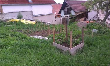 zemáčky nám už pekne rastú :)