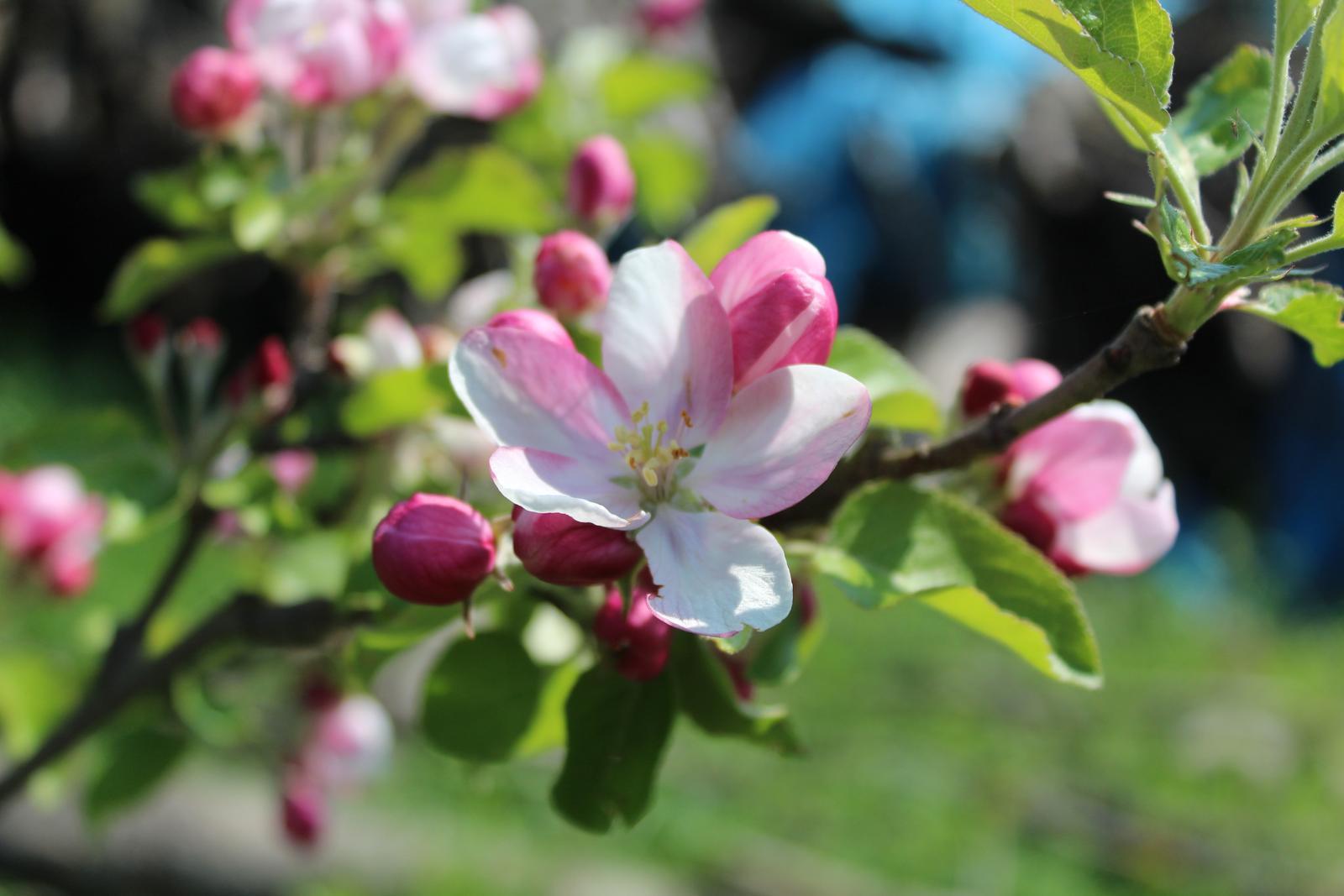 Zdravá záhrada - Obrázok č. 56