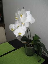 detmi tolko skušana orchidejka