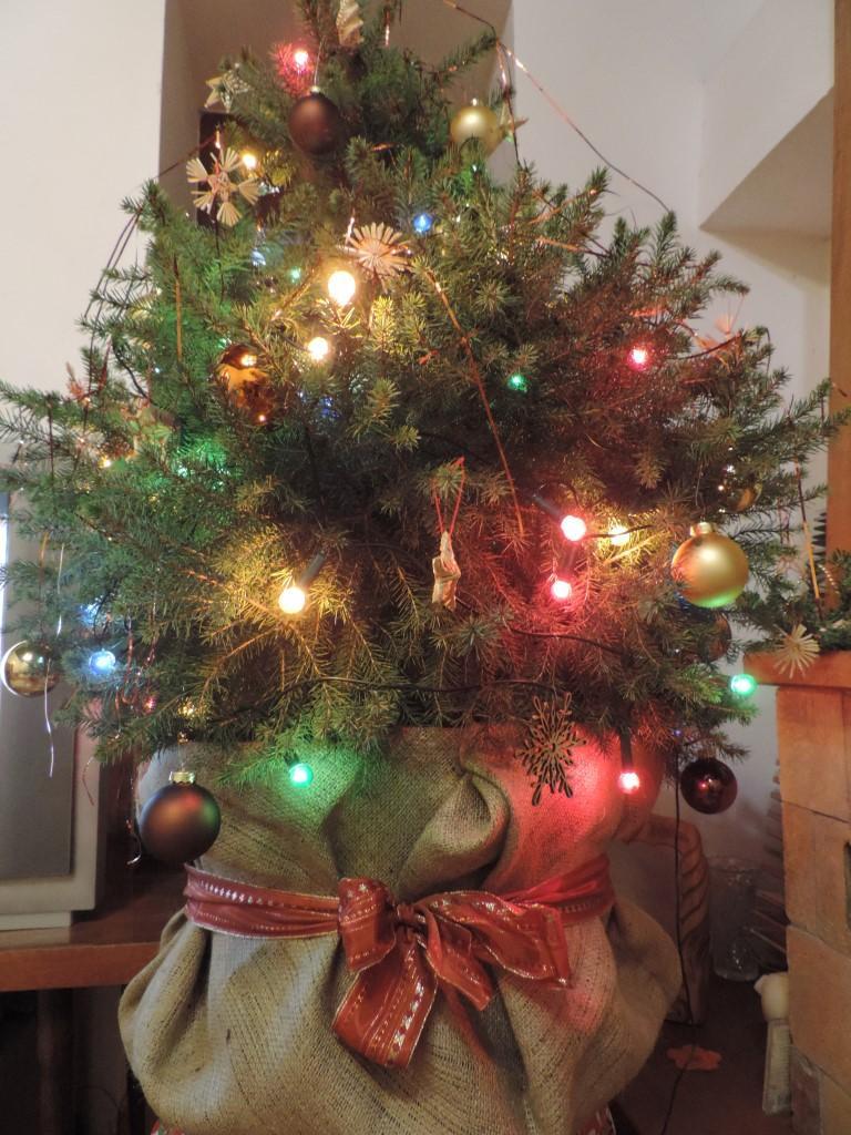 Naše Vianoce na vidieku - Stromček vysadím na jar do záhradky