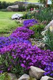 Udržované zahrady v květu
