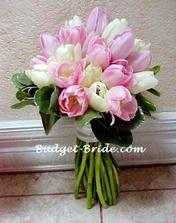tulipány jsou nádherné