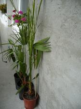 Vypestované zo semienok ,,,aj tie si už zvykli na nové bývanie