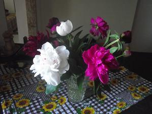 moje najoblúbenejšie kvety