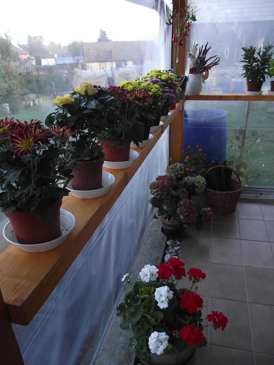 Prerábame dom - vďaka tomu, že sme dali foliu okolo terasy ,kvetinky takto pekne kvitnú
