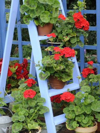 Balkonové a terasové zátišie - Obrázok č. 80