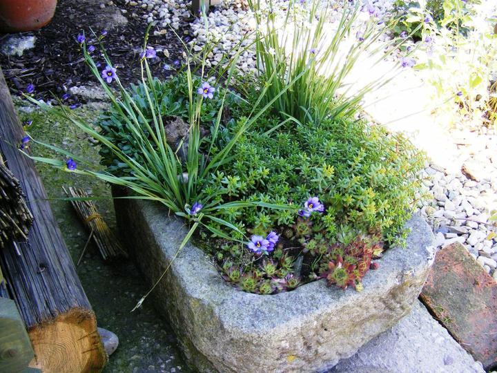 Skalky,skalničky a všeličo do záhrady - Obrázok č. 60