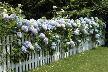 Kouzelná zahrada - Miluju Hortenzie :-)
