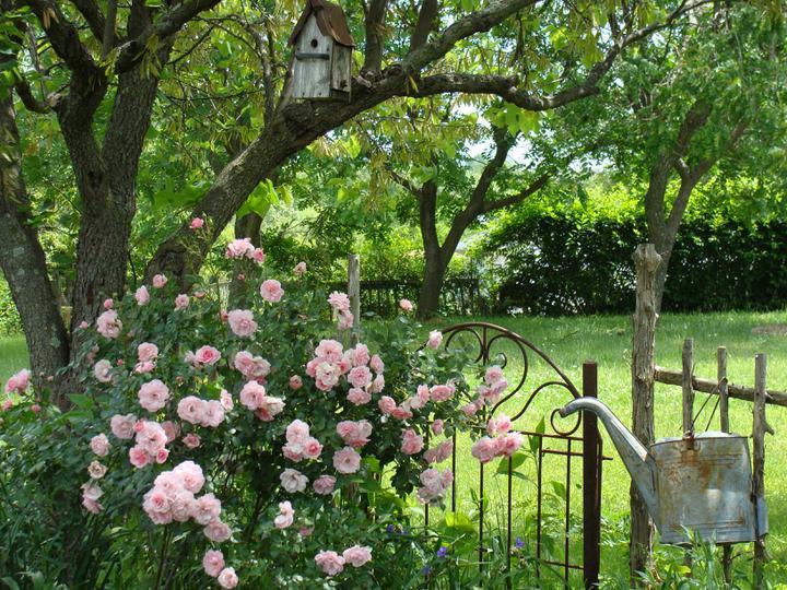 Krása divokej záhrady - Obrázok č. 70