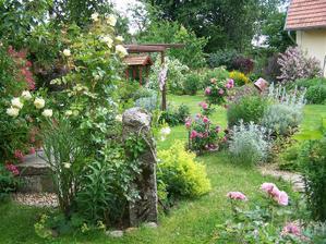ruža-královna záhrady