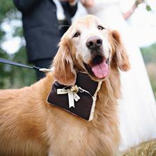 Psa s prsteny není radno pouštět z vodítka :-)