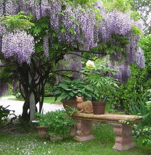 Kouzelná zahrada - Obrázek č. 44