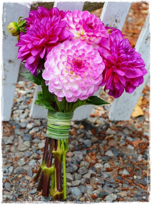 Wedding flowers 2013 - a zase ty Jiřiny :-)