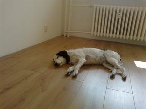 Test plovoucí podlahy - JO VYHOVUJE :)