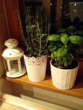 bylinkova mini zahradka