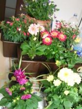 kytičky doma krásně kvetou