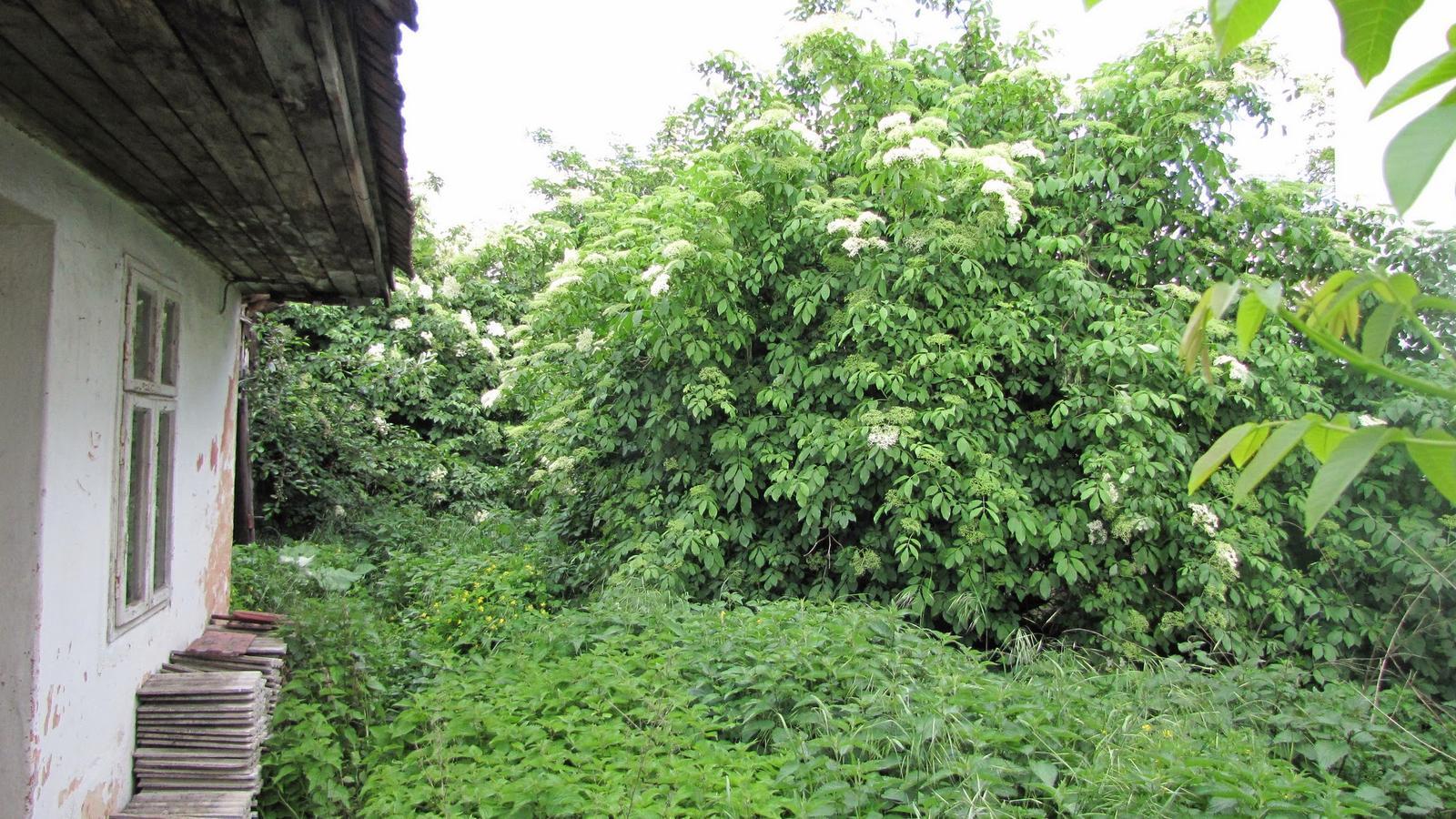 Rekonštrukcia starého domčeka - Pohľad do záhrady od dvora.(Džungla)Neviem čo s stým budem robiť ,asi chovať opice.