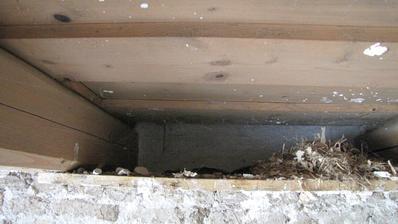 Našiel som v ňom 7 hniezd myší.Dutiny ich budú vždy lákať.