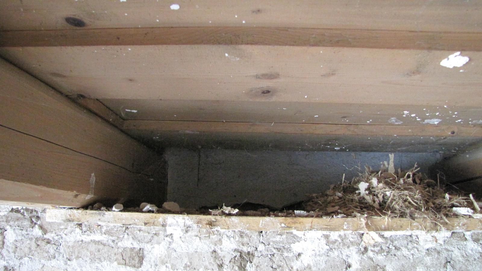 Rekonštrukcia starého domčeka - Našiel som v ňom 7 hniezd myší.Dutiny ich budú vždy lákať.