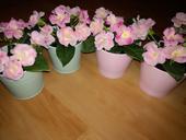 Umělé růžové kytičky v květináčích mint/pink,