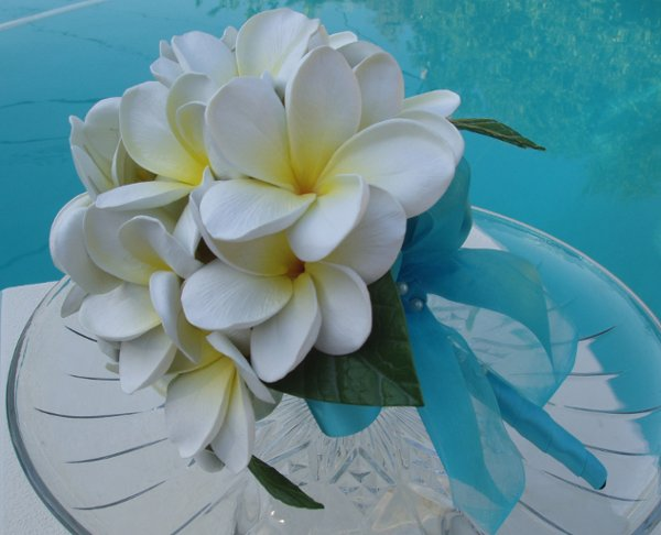 Kvetiny - biela plumeria