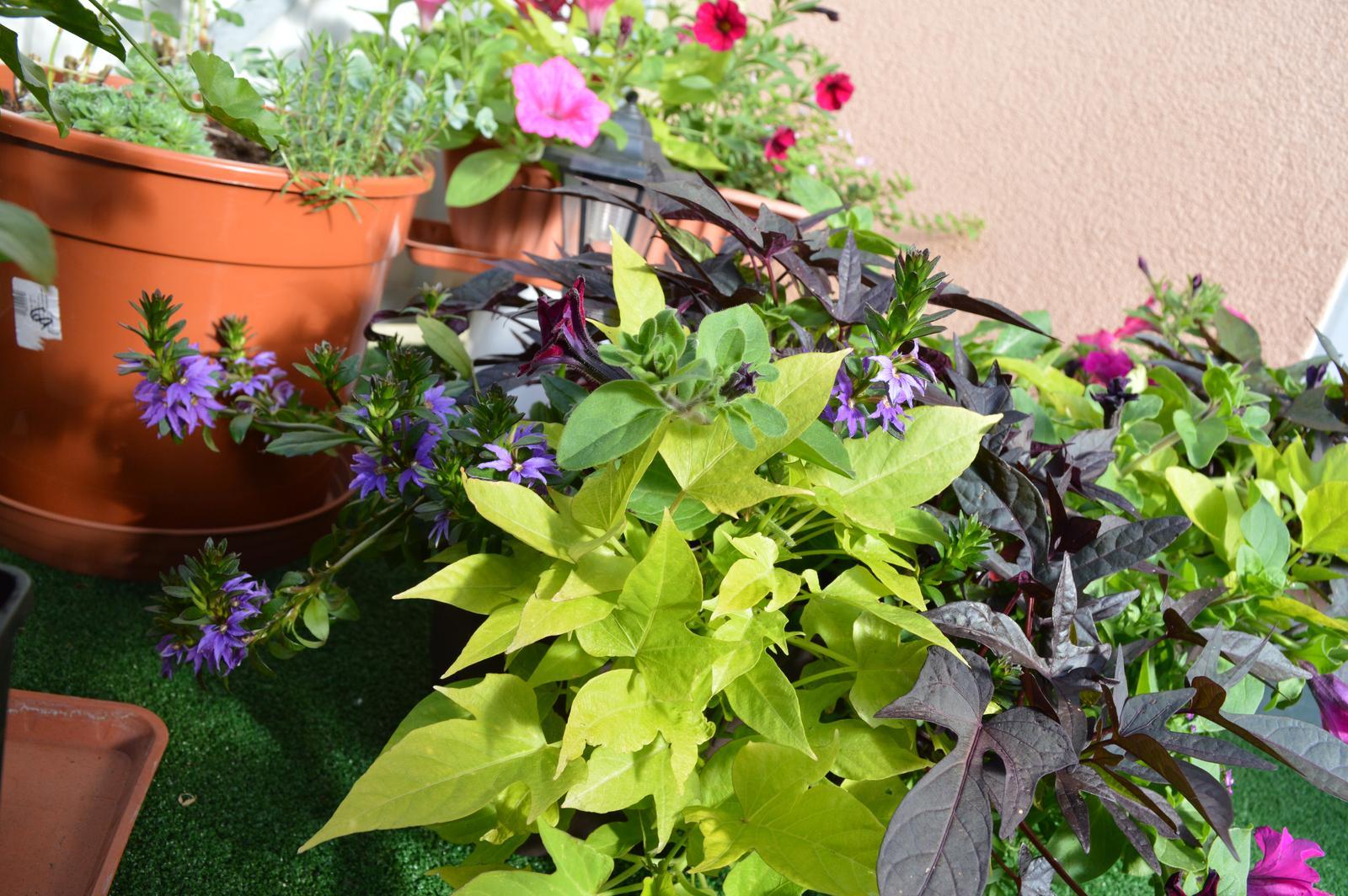 Moje květena.. - Obrázek č. 4
