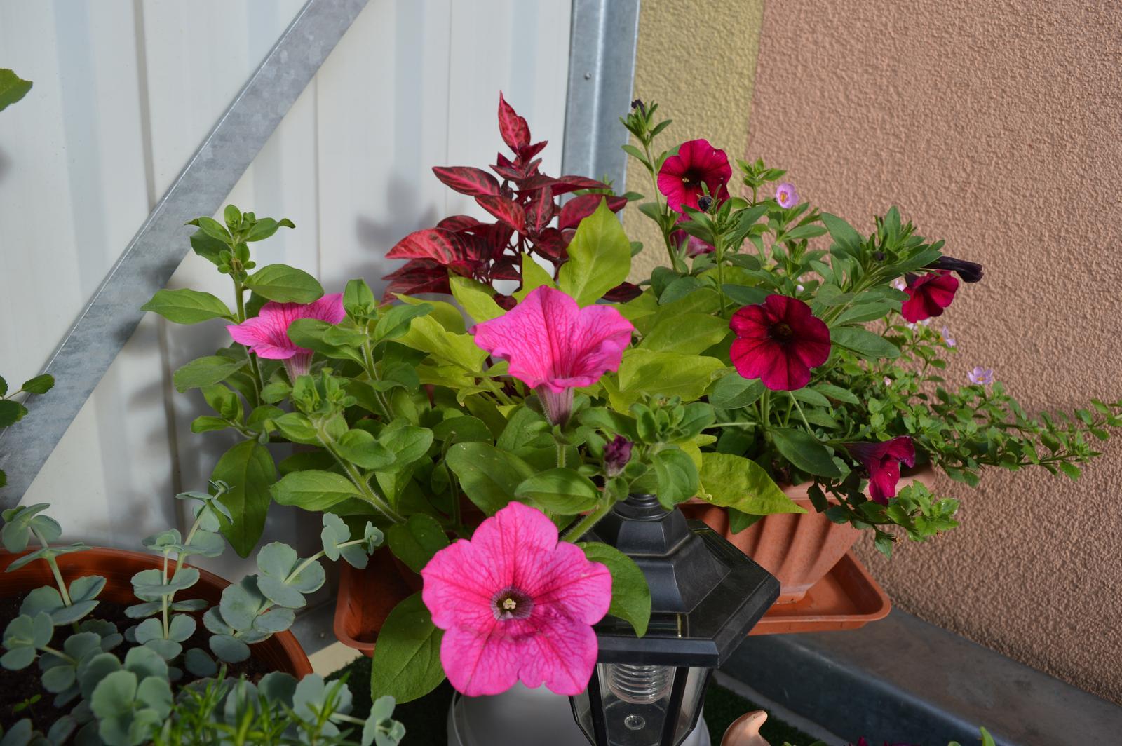 Moje květena.. - Obrázek č. 6