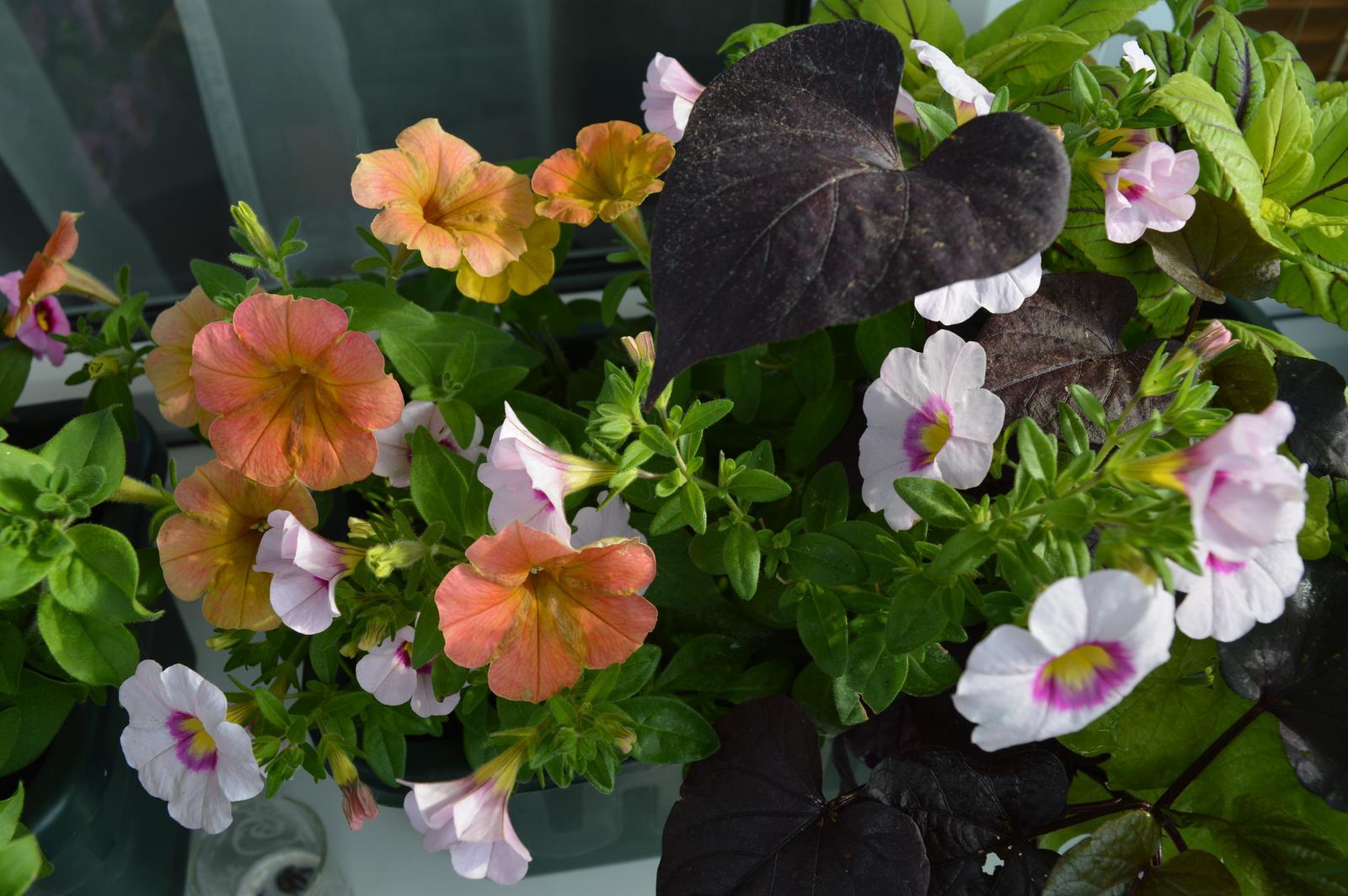 Moje květena.. - Obrázek č. 8