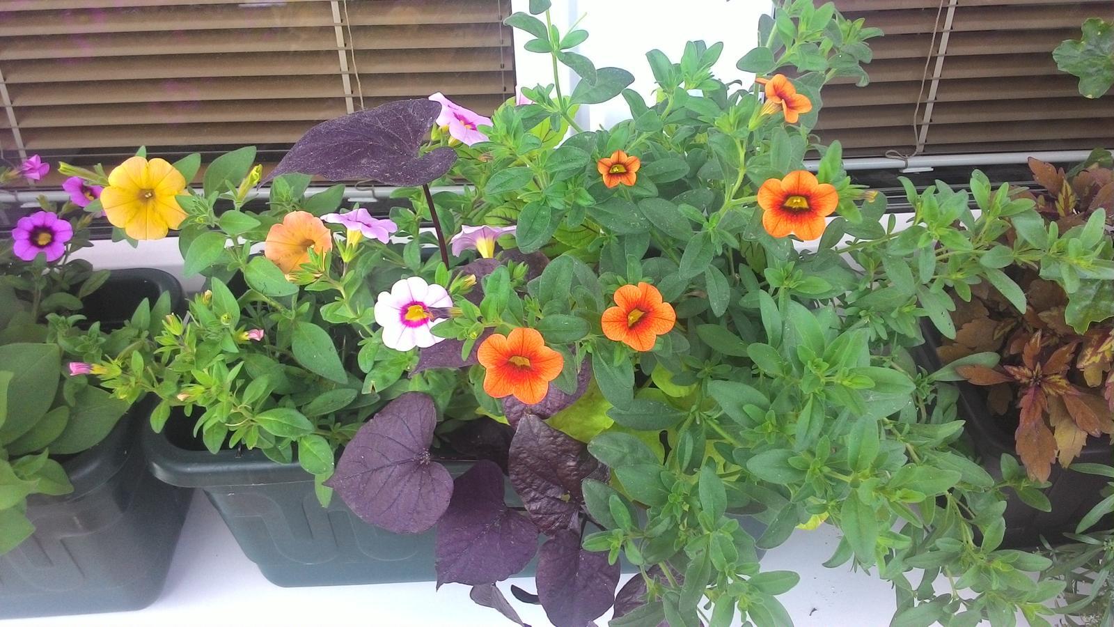Moje květena.. - Obrázek č. 43