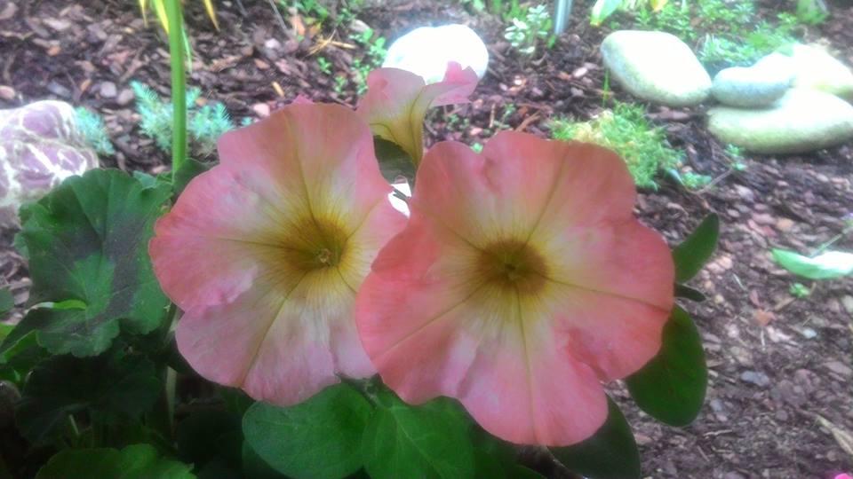 Moje květena.. - Obrázek č. 51