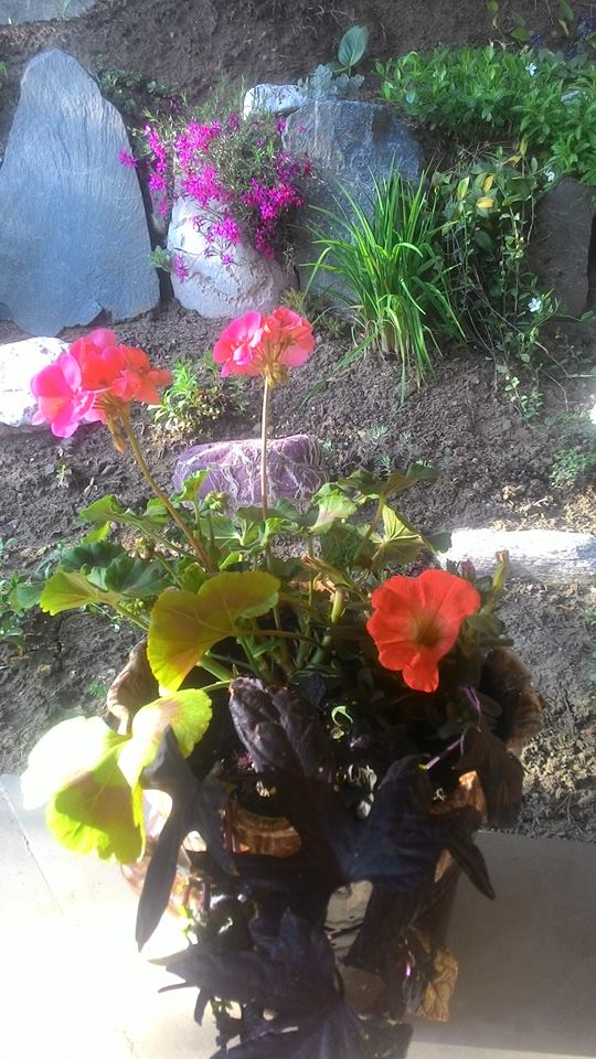 Moje květena.. - Obrázek č. 52