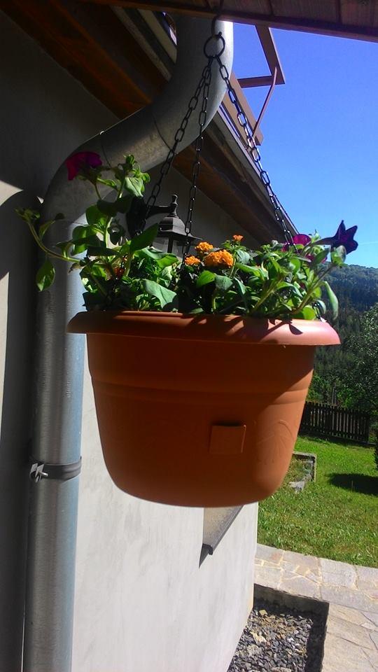 Moje květena.. - Obrázek č. 54