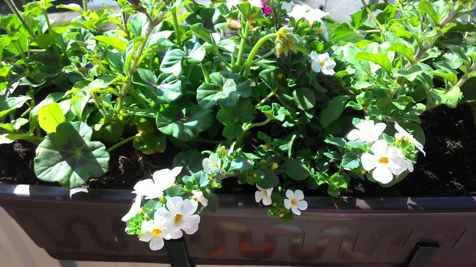 Moje květena.. - Obrázek č. 55