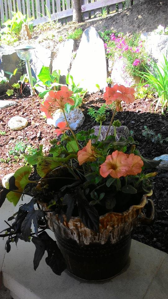 Moje květena.. - Obrázek č. 58