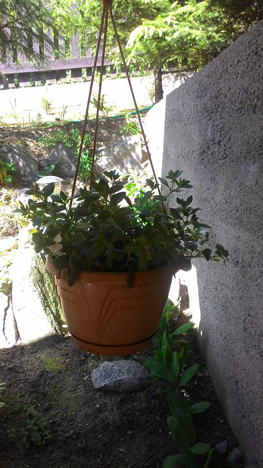 Moje květena.. - Obrázek č. 59