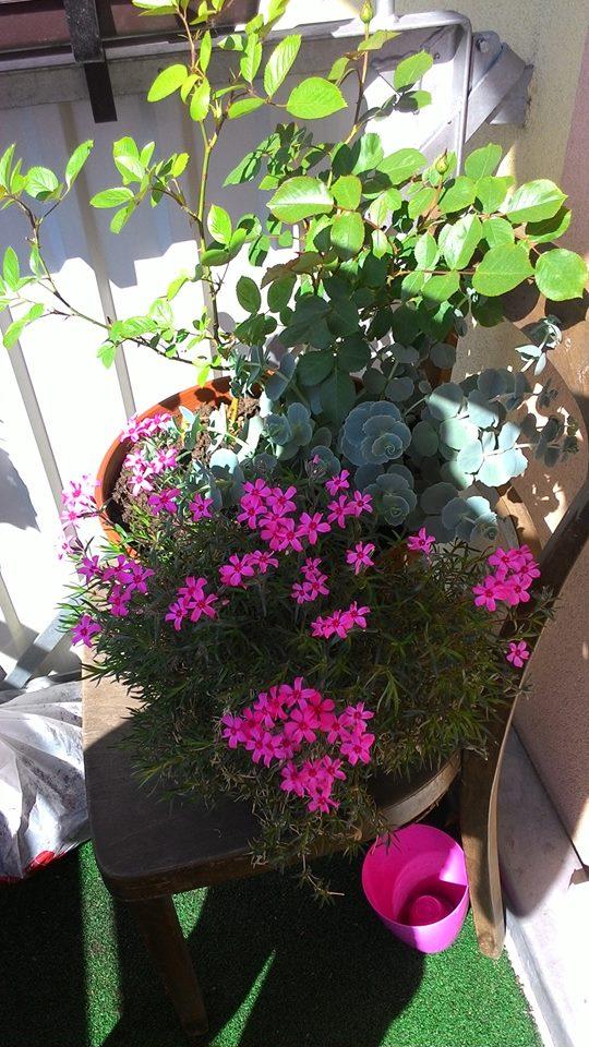 Moje květena.. - Obrázek č. 60