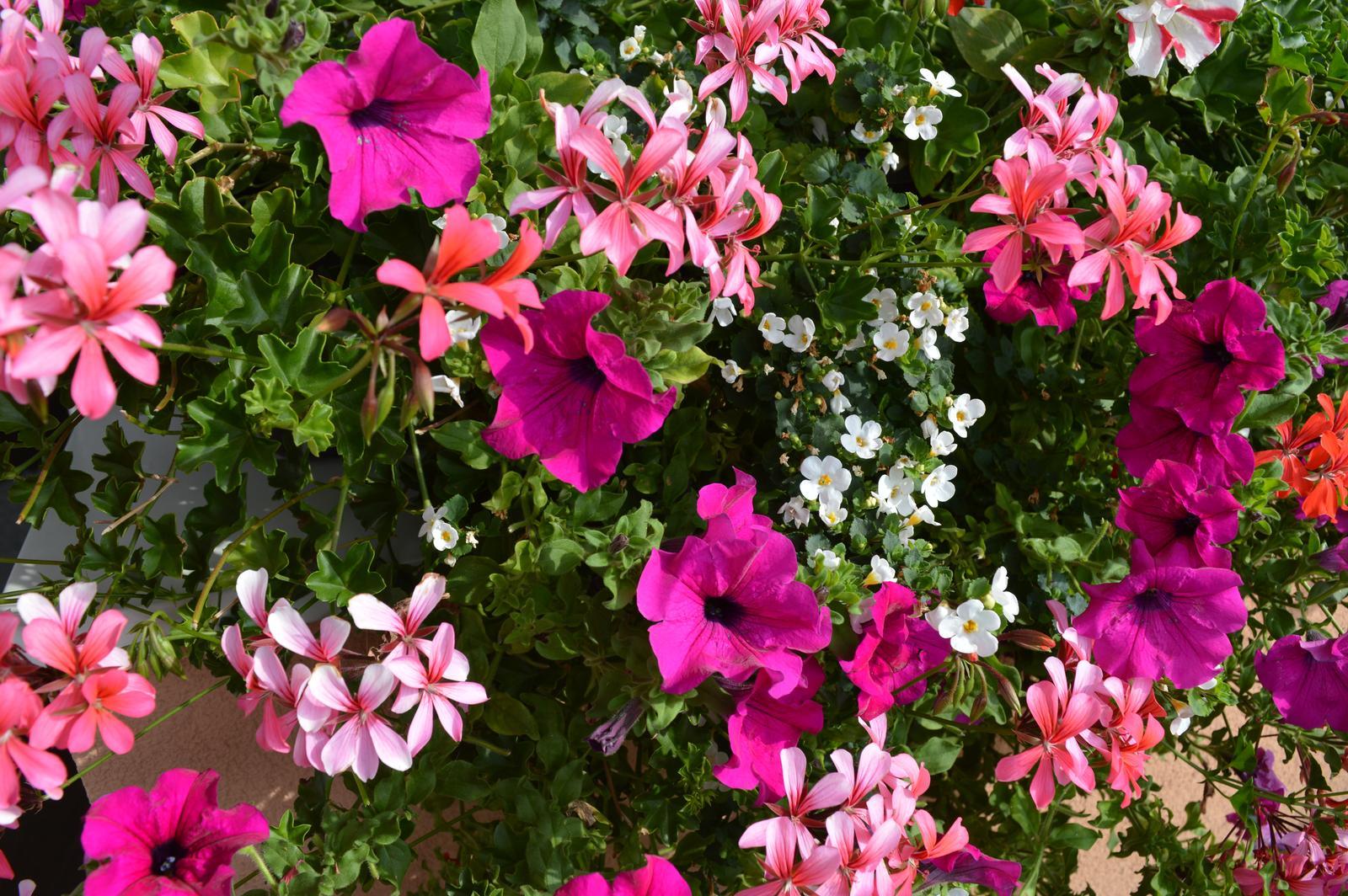 Moje květena.. - Obrázek č. 63