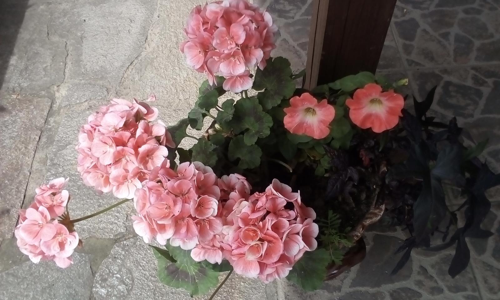 Moje květena.. - Obrázek č. 66