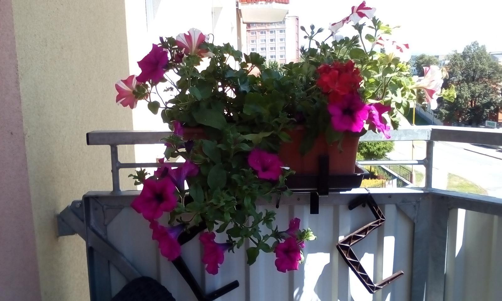 Moje květena.. - Obrázek č. 72