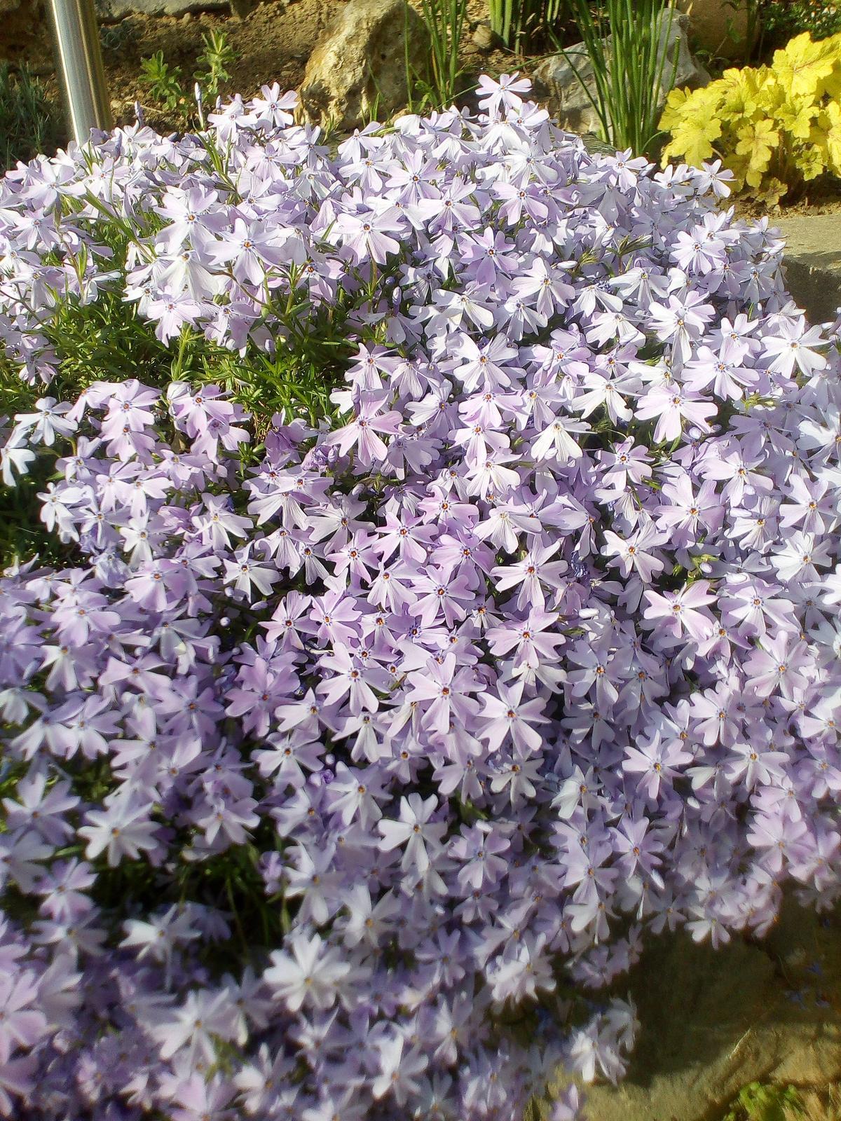 Moje květena.. - Obrázek č. 76